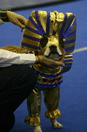 Конкурс костюмов это фараон
