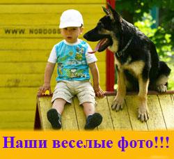 Собака дрессировка собак отдых собак