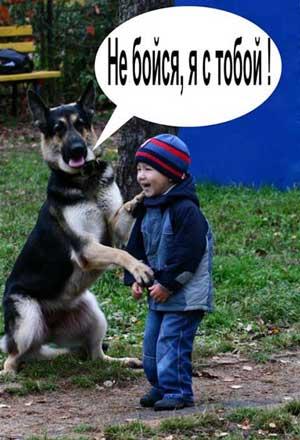 Производители для собак