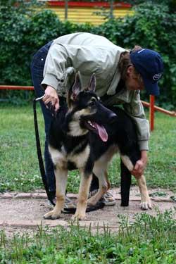 Площадка для дрессировка собак